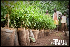 plant a tree campaign | pacific shoji works